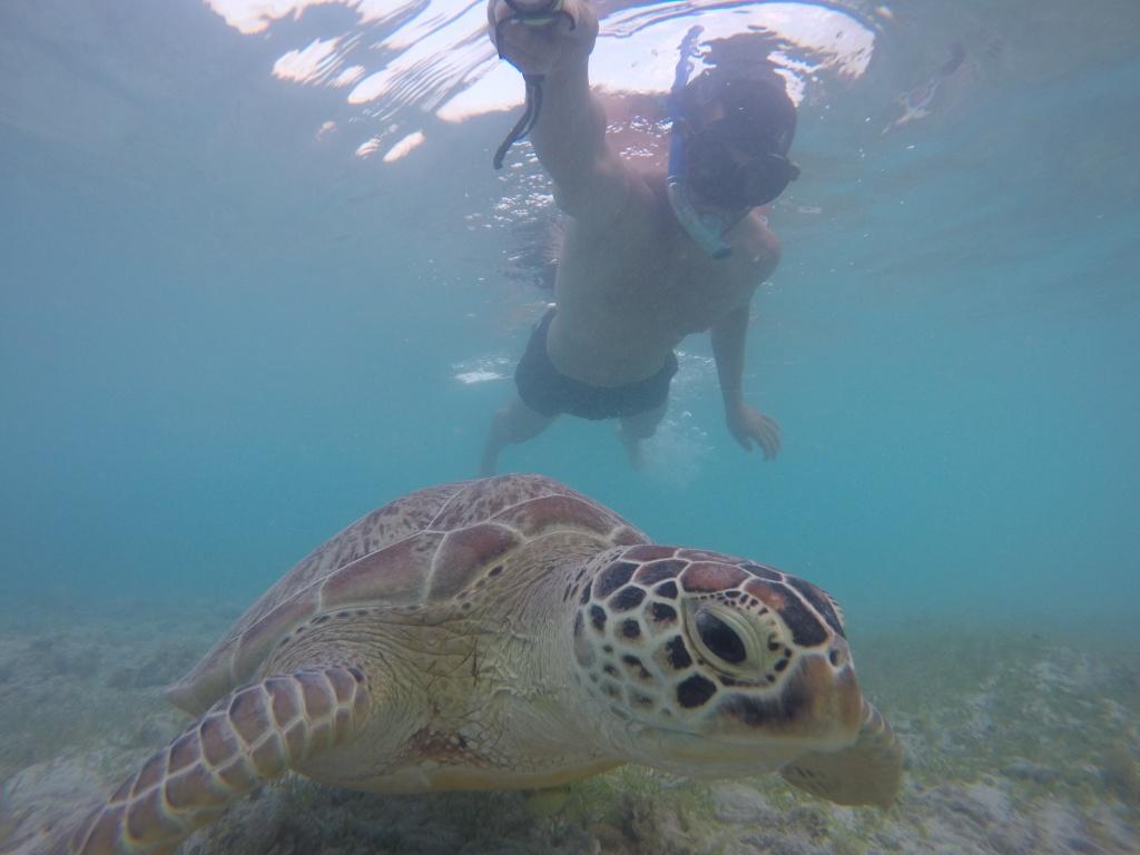 Tortugas en GiliT